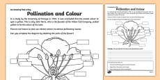 Pollination and Colour Activity Sheet