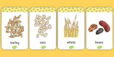 Harvest Grains Flash Cards