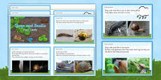 Slugs and Snails EYFS Fact Cards