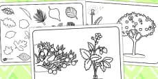 Plant Colouring Sheets