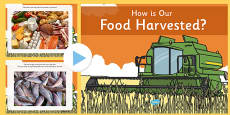 How Is Our Food Harvested? PowerPoint