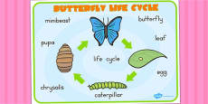 Australia - Butterfly Lifecycle Word Mat