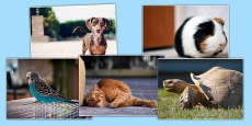French Pets Photo Clip Art Pack