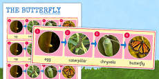 Butterfly Life Cycle Photo Strip
