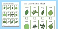 Tree Identification Work Sheet