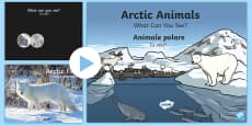 Arctic Animals What Can You See? PowerPoint English/Romanian