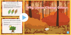 Why Leaves Change Colour PowerPoint