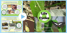 Year 5 Science Lifecycles Lesson Teaching PowerPoint