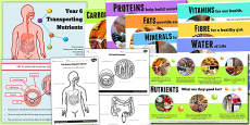 Year 6 Transporting Nutrients Teaching Pack