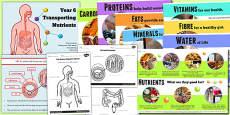 Year 6 Transporting Nutrients Teaching Pack