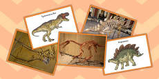Dinosaurs and Their Fossils Sort Cards