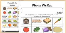 Activity Sheet Plants We Eat