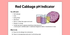Red Cabbage Indicator Adult Guidance Sheet