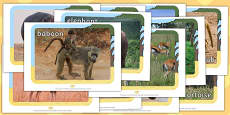 Safari Animals Display Photos