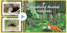 * NEW * Woodland Animal Habitats PowerPoint
