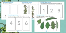Beanstalk Height And Length Ordering Activity Sheets