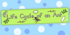 Australia - Ant Life Cycle Display Banner