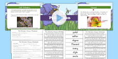 KS2 Life Cycles Flower Pollination Task Setter PowerPoint