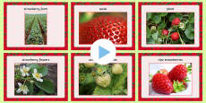 Strawberry Words and Pictures PowerPoint