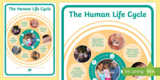 Human Life Cycle Display Poster