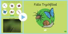 Pwerpwynt Fidio Trychfilod