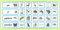 Animals Word Cards Te Reo Māori