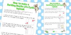 Australia - Darkling Beetle Life Cycle Lapbook Instruction Sheet