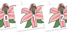 Numbers 0-31 on Lilies