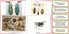 Looking at Insect Art Photopack and Prompt Questions