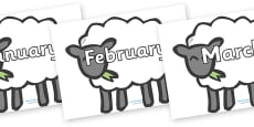 Months of the Year on Sheep