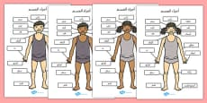 Parts of the Body A4 Arabic