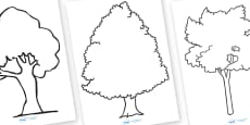 Tree Outline Worksheets