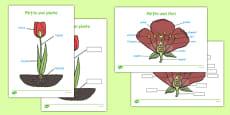 Părțile unei plante - Planșe