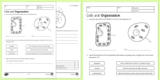 KS3 Cells and Organisation Homework Activity Sheet
