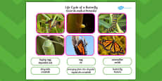 Life Cycle of a Butterfly Photo Cut Out Pack Romanian Translation