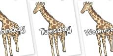 Days of the Week on Giraffe