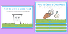 How to Grow a Cress Head Display Posters