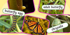 Life Cycle of a Butterfly Photo Cut Out Pack