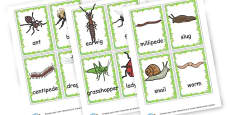 Minibeast Picture Cards