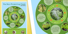Non Flowering Plant Life Cycle Display Poster