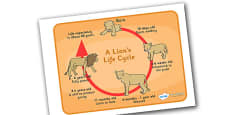 Lion Life Cycle Display Poster / Word Mat