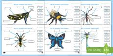 Identifică părțile unei insecte  Fișă de lucru