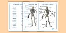 Human Skeleton Labelling Sheets (Common Names)