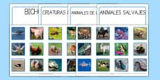 Ficha de clasificar diversos animales