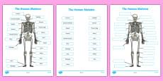 Human Skeleton Labelling Sheets Scientific Names