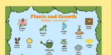 Plants and Growth Topic Word Mat Polish Translation
