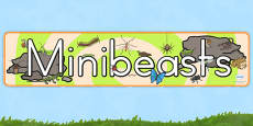 Australia - Minibeasts Display Banner