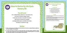 Colourful Butterfly Life Cycle Sensory Bin