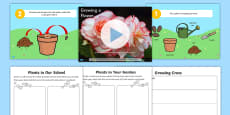 Growing a Flower Differentiated Lesson Teaching Pack