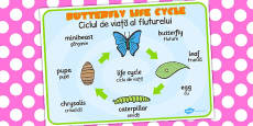 Butterfly Life Cycle Word Mat Romanian Translation